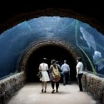 World's largest freshwater aquarium opens