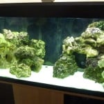 How To Set Up A Tropheus Breeding Tank