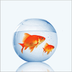 Can you keep Goldfish in a bowl