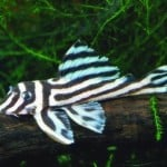 Where To Buy Tropical Fish