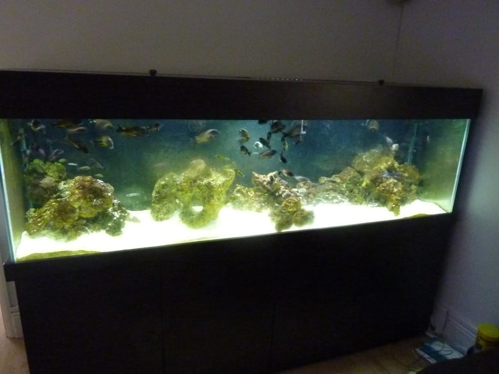 Tank before using JBL Aqua-T Handy Aquarium Glass Scraper