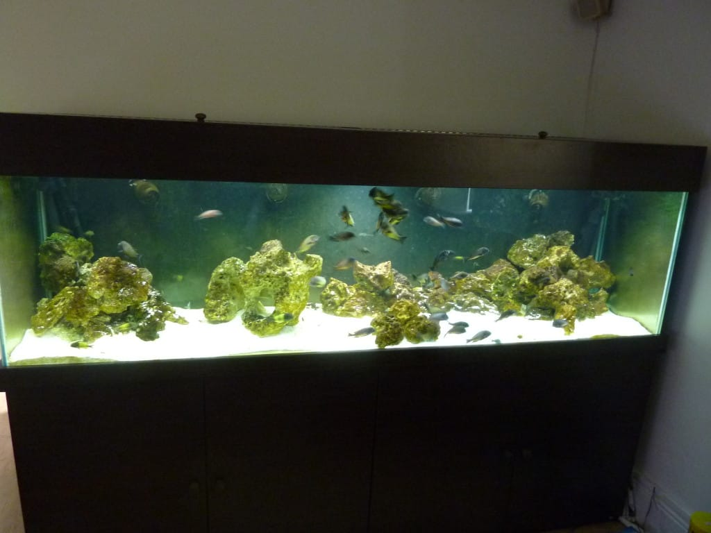 After using JBL Aqua-T Handy Aquarium Glass Scraper