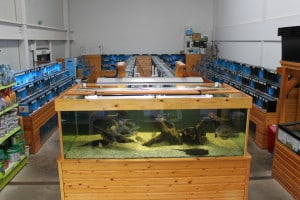 Stratford upon avon maidenhead aquatics fish store review for Fish stores in ma