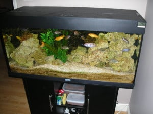 Should you put a fish tank straight on the stand tropical fish site - Reasons why you should have solid surface products in your home ...