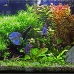 What Are The Best Tropical Fish To Keep To Begin With?