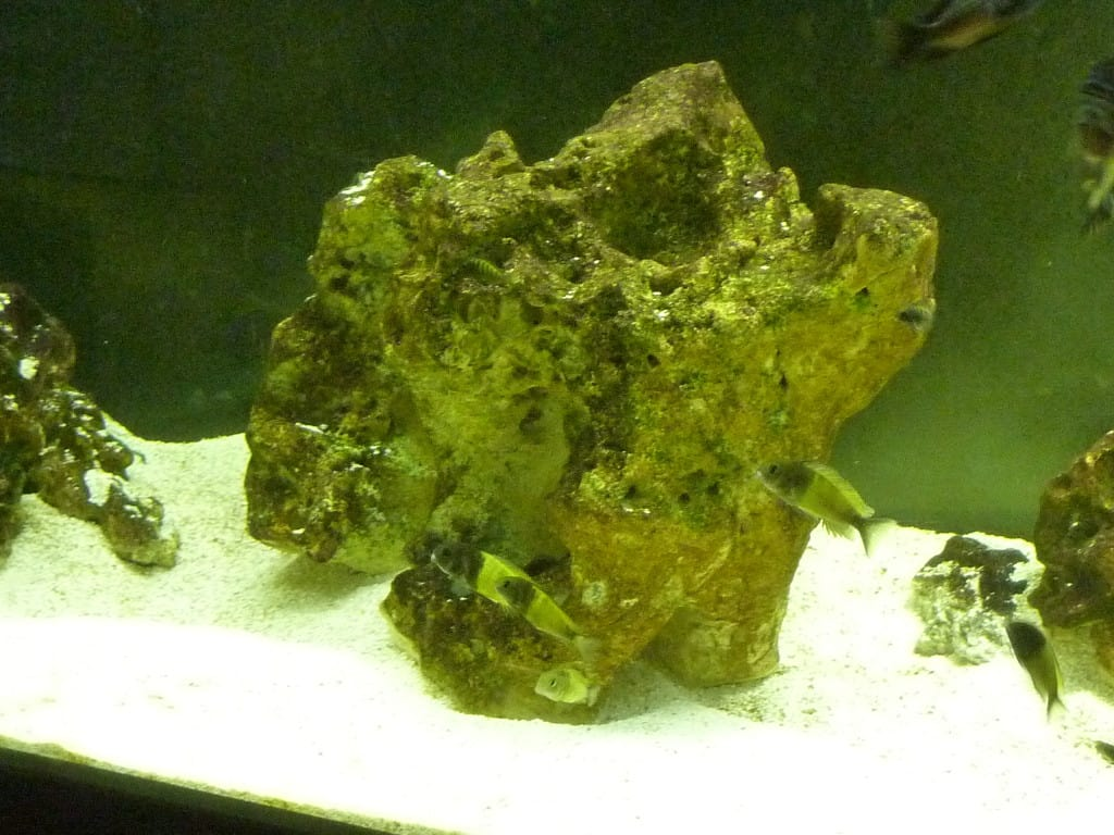 Over 20kg Ocean Rock
