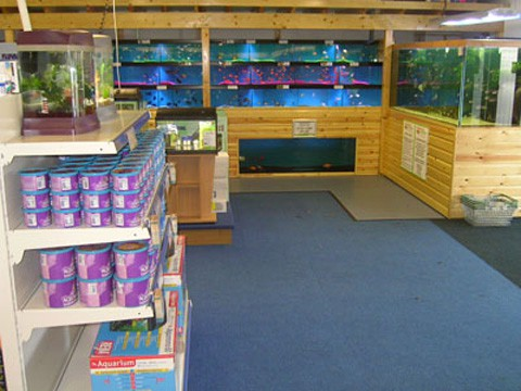 Oxford maidenhead aquatics fish store review tropical for Fish stores in ma