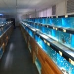 St Albans Maidenhead Aquatics Fish Store Review
