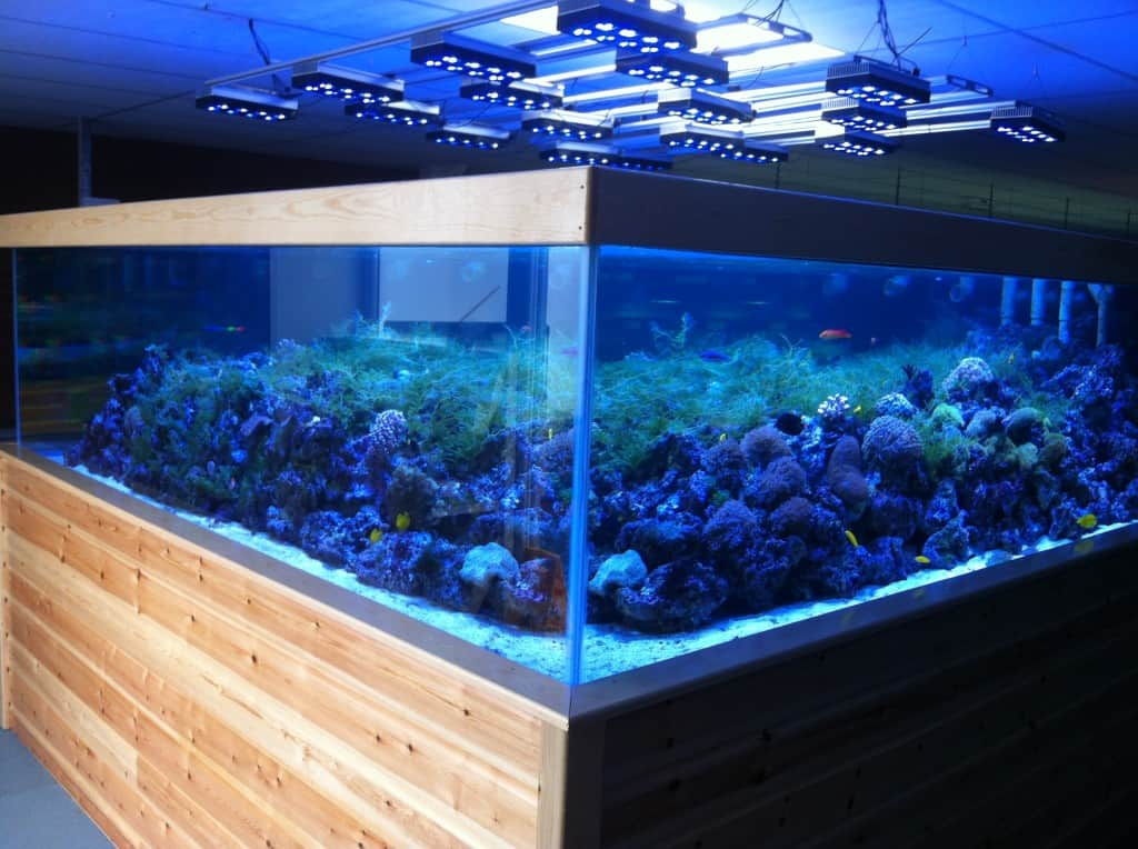 St albans maidenhead aquatics fish store review tropical for Salt water fish store