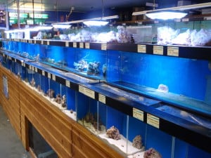Store reviews south east england tropical fish site page 2 for Fish stores in ma