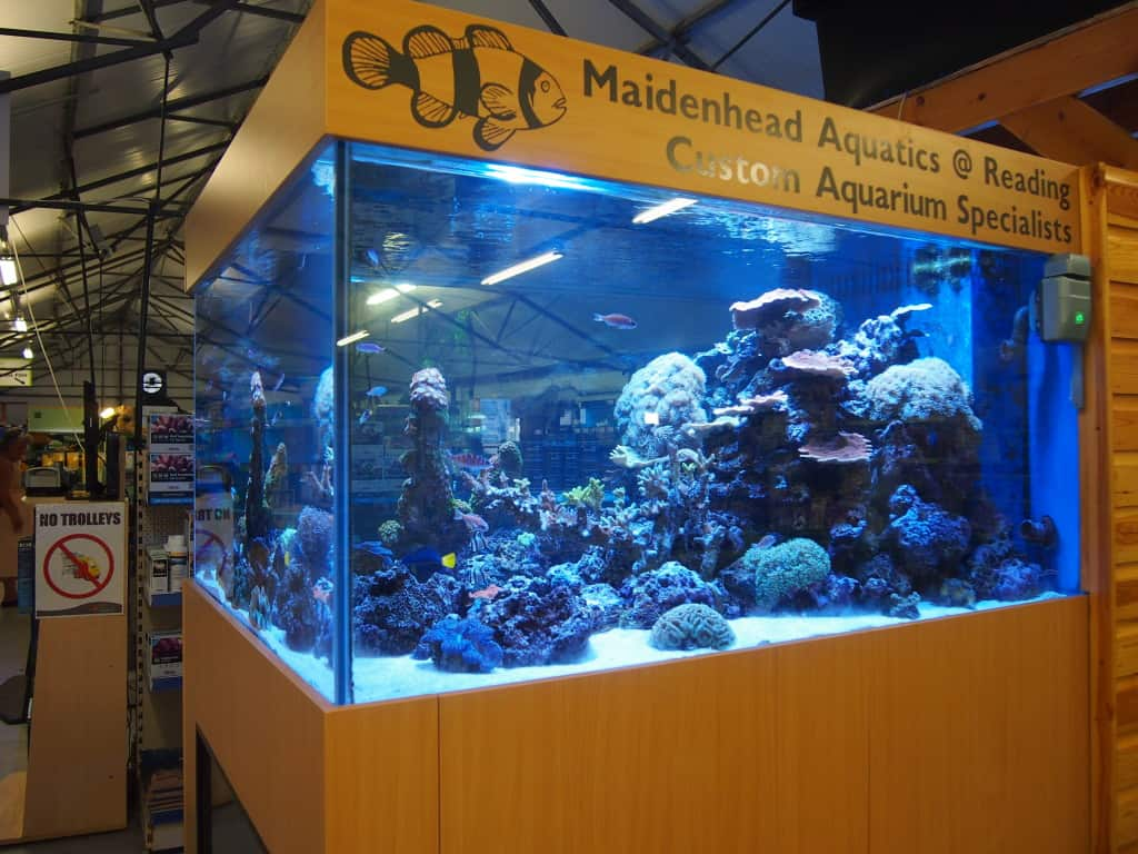 Aquarium fish tank reading - When Talking To The Staff In Maidenhead Aquatics Reading It Is Clear Their Knowledge Of Fish And Equipment Is Very Good Impartial Advice Is Always Given
