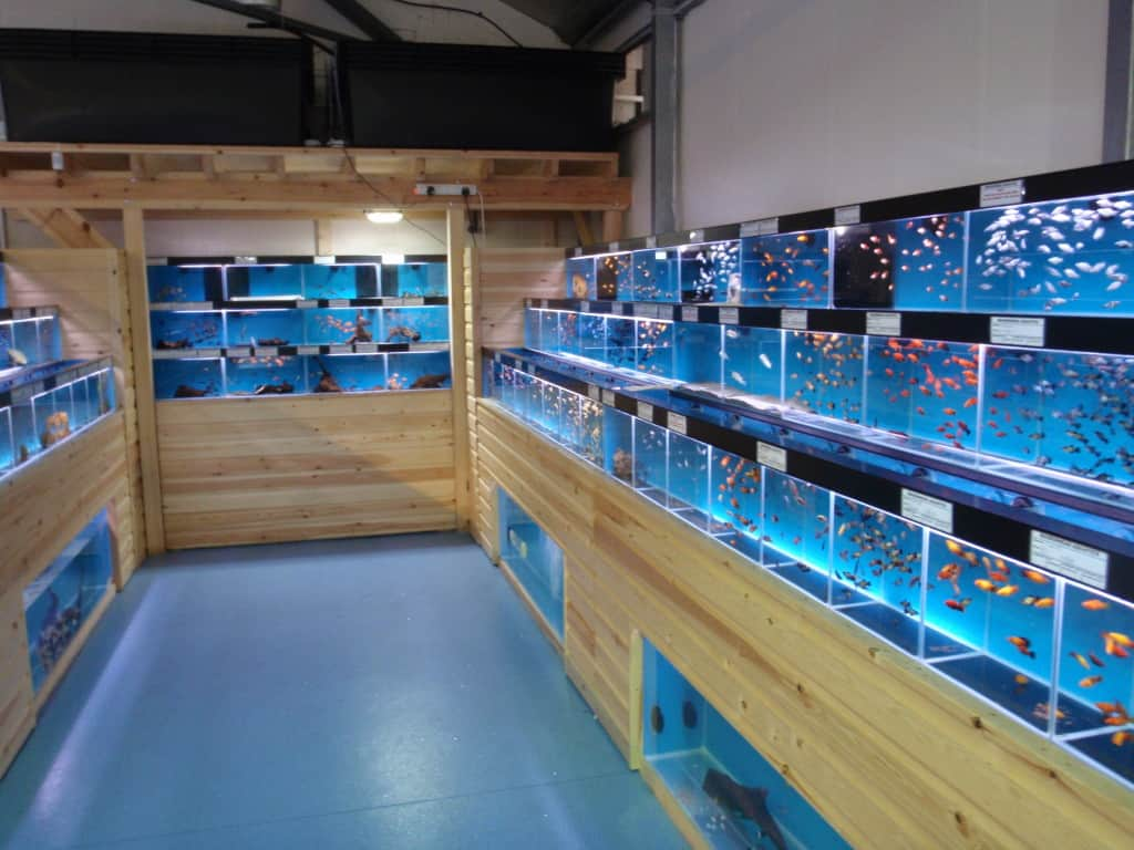 Windsor maidenhead aquatics fish store review tropical for Salt water fish store