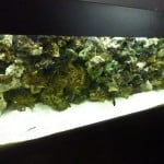 Buying a Custom Made Aquarium Or an Off The Shelf Model