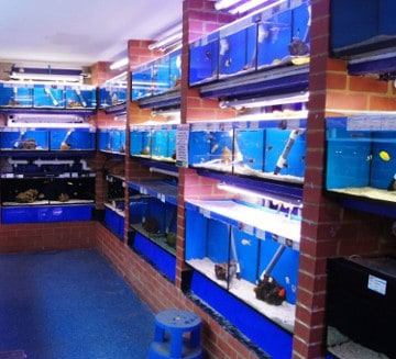 Wellingborough maidenhead aquatics fish store review for Fish stores in ma