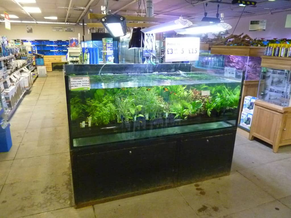 Iver Maidenhead Aquatics Plant Selection