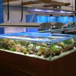 Barnstaple Maidenhead Aquatics Fish Store Review