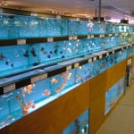Basingstoke Maidenhead Aquatics Fish Store Review