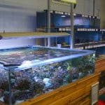 Bridgend Maidenhead Aquatics Fish Store Review