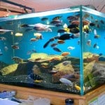 Chichester Maidenhead Aquatics Fish Store Review