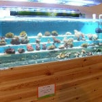 Hare Hatch Maidenhead Aquatics Fish Store Review