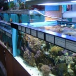 Havant Maidenhead Aquatics Fish Store Review