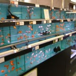 Hereford Maidenhead Aquatics Fish Store Review