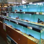 Ramsgate Maidenhead Aquatics Fish Store Review