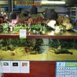 Taunton Maidenhead Aquatics Fish Store Review