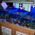 Teignmouth Maidenhead Aquatics Fish Store Review