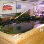 Wigan Maidenhead Aquatics Fish Store Review