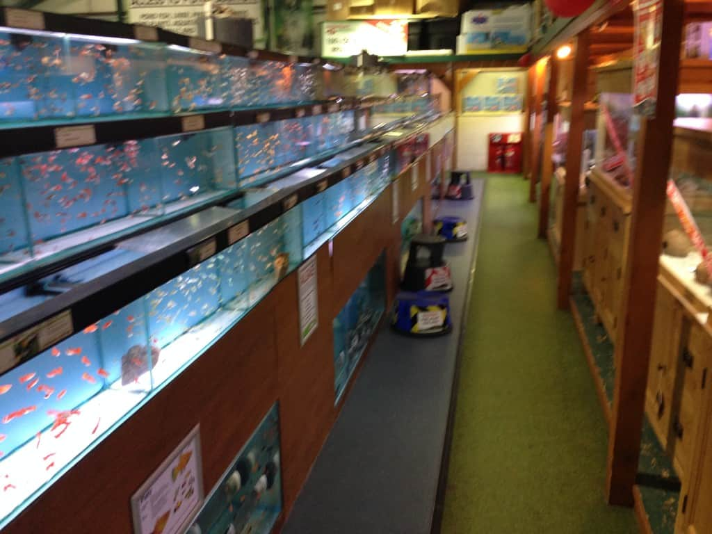 Aquarium fish tank northamptonshire - If You Are Looking For African Cichlids Or Marine Fish Then A Trip Up The Road To The Wellingborough Maidenhead Aquatics Would Be Recommended As This Is
