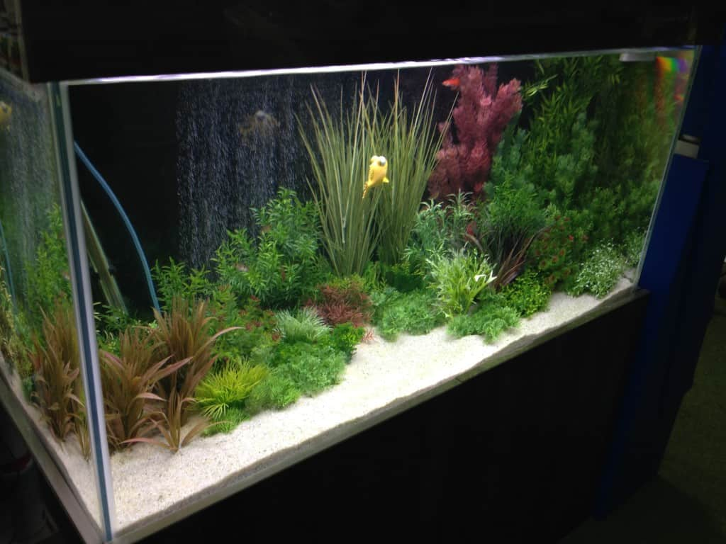 Northampton Maidenhead Aquatics Fish Store Review