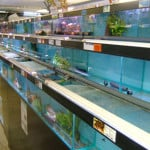 Chipperfield Maidenhead Aquatics Fish Store Review