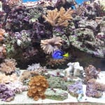 Crawley Maidenhead Aquatics Fish Store Review