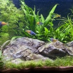 Woodford Maidenhead Aquatics Fish Store Review
