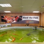 Heighley Gate Maidenhead Aquatics Fish Store Review