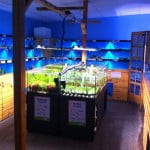 Thornbury Maidenhead Aquatics Fish Store Review