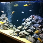 Bristol Maidenhead Aquatics Fish Store Review