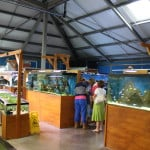 Mere Park Maidenhead Aquatics Fish Store Review
