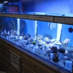 Cwmbran Maidenhead Aquatics Fish Store Review