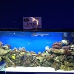 Llantrisant Maidenhead Aquatics Fish Store Review