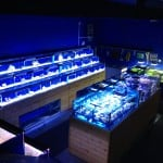 Coventry Maidenhead Aquatics Fish Store Review