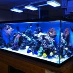 Woking Maidenhead Aquatics Fish Store Review