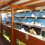 Stapleton Maidenhead Aquatics Fish Store Review