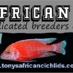 Tonys African Cichlids Fish Store Review