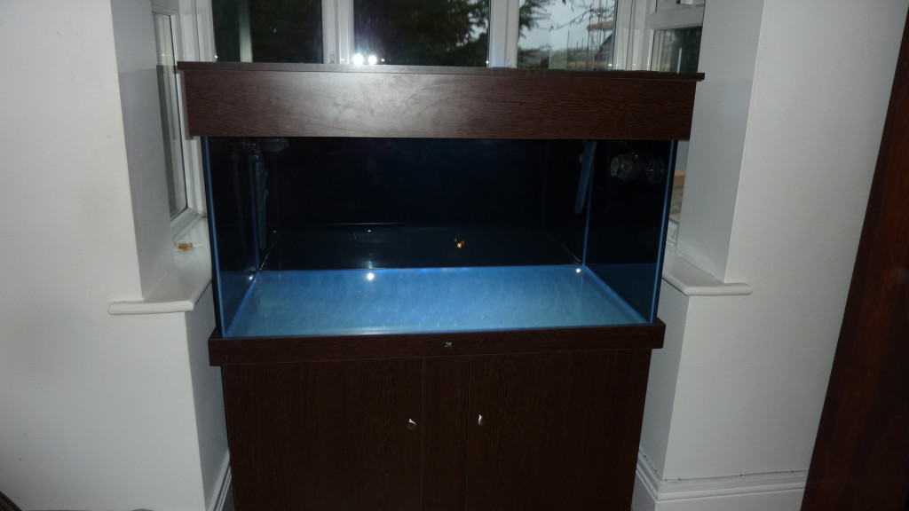Should i put a background on my fish tank aquarium for How much fish oil should i give my dog