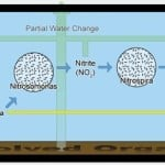 Understanding The Nitrogen Cycle In A Fish Tank Aquarium