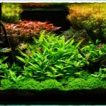 The Key To A Successful Planted Fish Tank Aquarium
