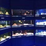 Cheddar Maidenhead Aquatics Fish Store Review