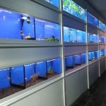 The Aquatic Store Fish Store Review